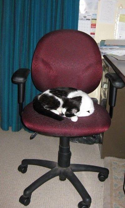 Secretary's Nana-nap