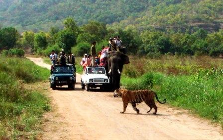 Tourists in Elephant & Jeep in Bandhavgarh Tiger Reserve