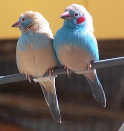 My own Finches
