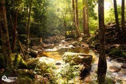 Beautiful jungles of Malaysia