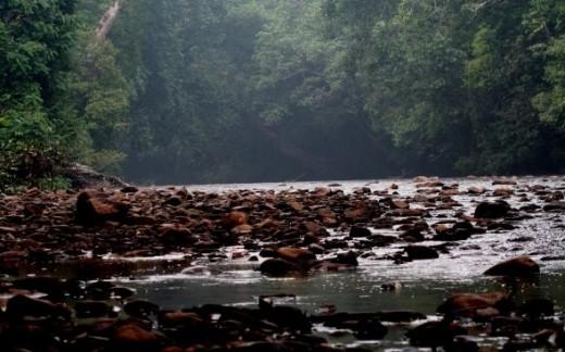 Jungles of Taman Negara