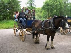 Horse-drawn carriage in Ireland