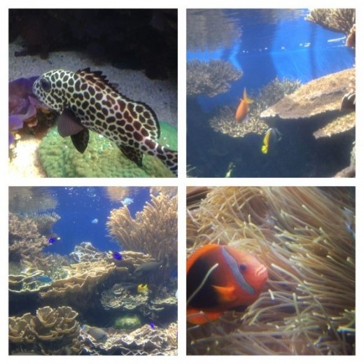A few hours at the Waikiki Aquarium is soothing, interesting, fascinating, and... COOL inside.