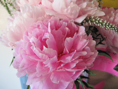 Georgeous peonies roses as part of the lovely floral arrangement Lilly brought for me.