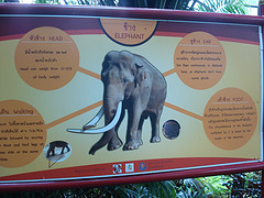 There is some excellent signage around the elephant enclosure