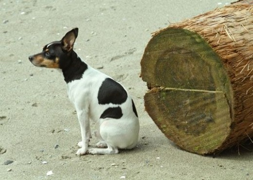 little-dog-and-tree
