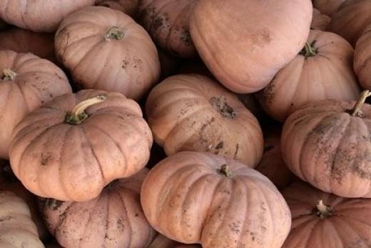 Pumpkins At A Local Farm