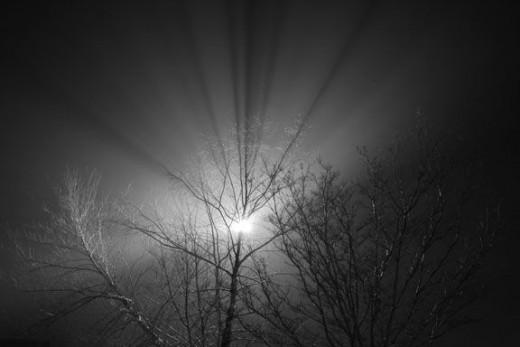 light-shining-through-tree-limbs