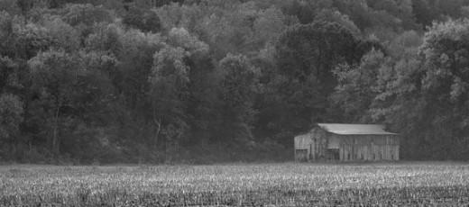 old-barn-in-corn-field