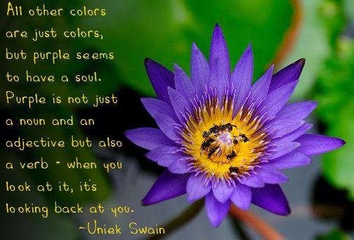 purple-lotus