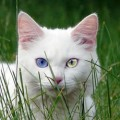 Unusual and Unique Names for White Cats