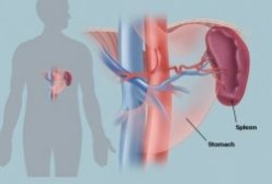 How to Cleanse Your Spleen