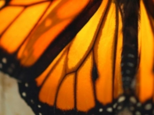 Beautiful butterflies are a lovely home decor idea.