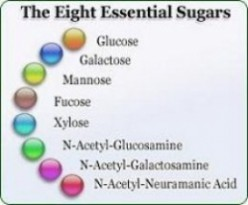 Glyconutrients- Scam Or Sugars That Heal?