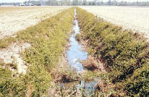 A poorly managed riparian zone. Photo by Soil-Science.info