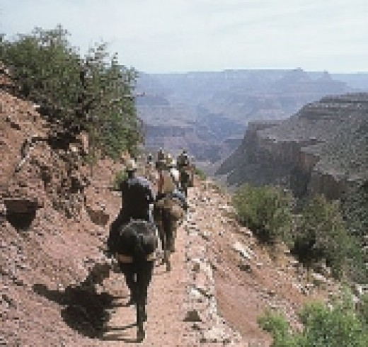 Mule Trips at the Grand Canyon