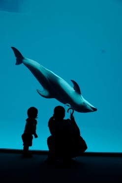 Are Dolphins Really Smart? The Book You Need to Read