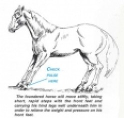 Horse Lameness: Signs, Treatments, Discussions