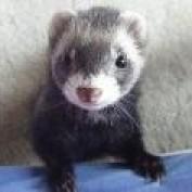 SilverFerret801 profile image