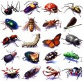 insects insects everywhere