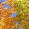 Tetradica profile image