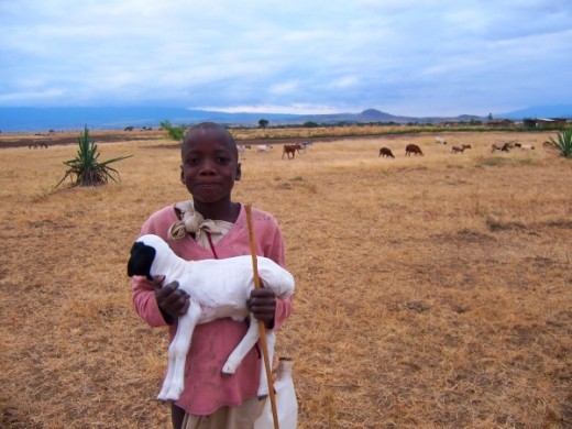 Beautiful local girl with her baby sheep.