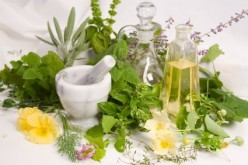 Common Herbs Used To Treat Lyme Disease