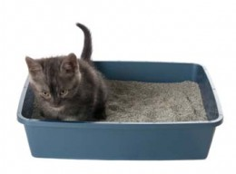 Does your kitty have a cat urinary tract infection?