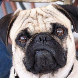 Dog Farts - Dog Farting - Do Dog Fart