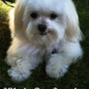whirlydogsuppli1 profile image