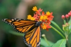How Does a Caterpillar Turn Into a Butterfly?