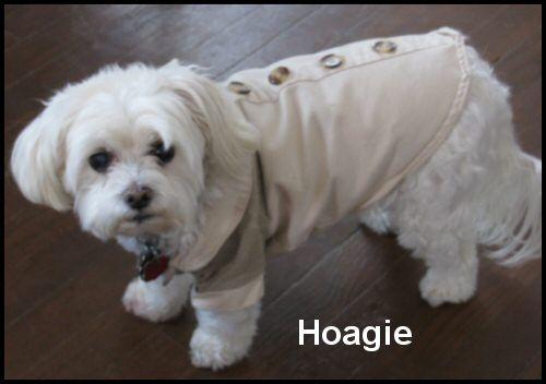 Momma's little boy 'Hoagie'
