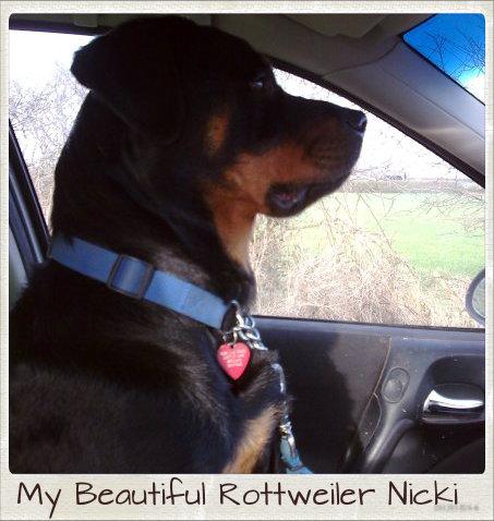 My old Rottweiler Nicki,