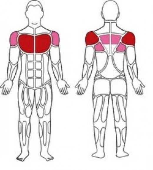 Pecks, Decks, and Biceps Muscles Used in Chest Fly Exercise