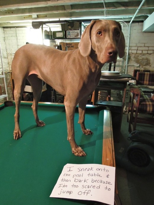 Dogs In The Pool . . table