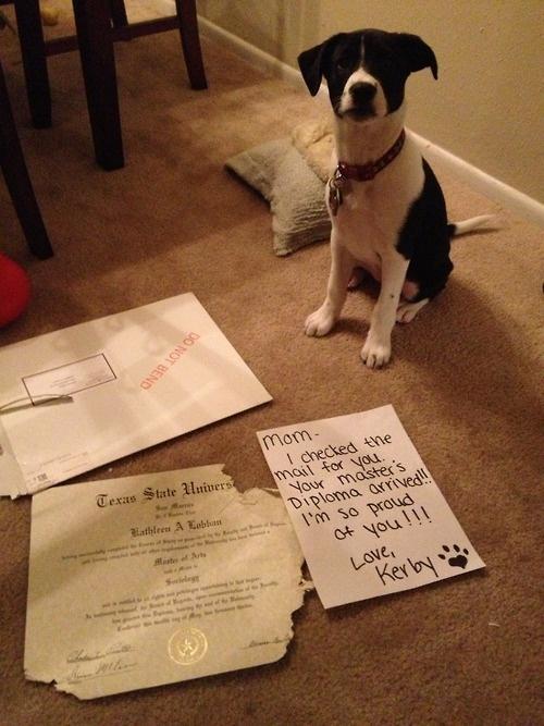 Doggy Diplomacy