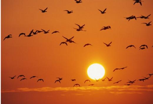 Enjoy Birds In Flight