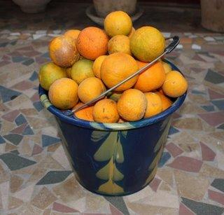 Free(Stolen) Oranges