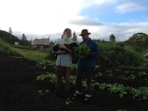 Gardens and a lamb at The Shire in Pahoa, Hawaii...