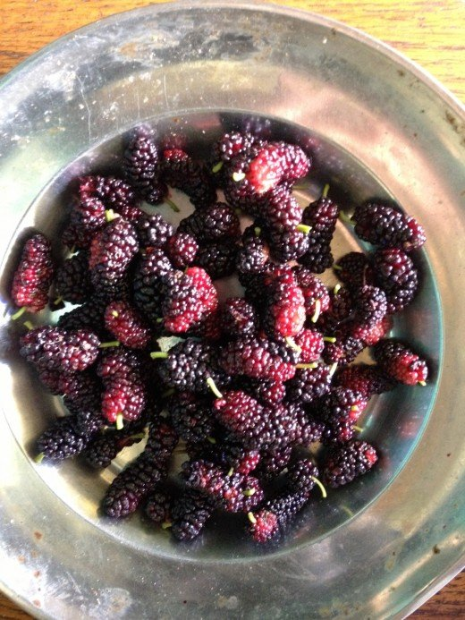 Mmm... mulberries!