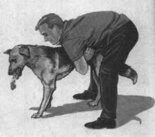 Heimlich for dogs.