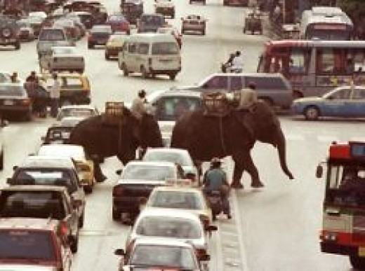 Elephants in the traffic in Bangkok - Buy at Allposters.com