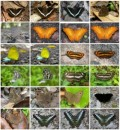 Royalty Free Photos - Butterflies