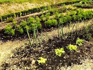 Grow a Garden Business