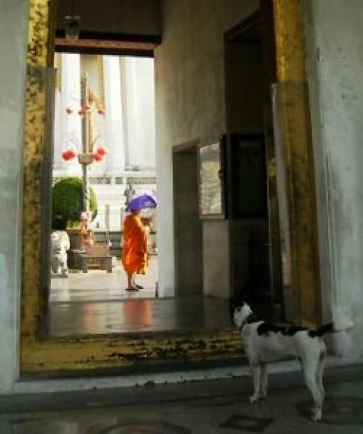 Monk & Dog at Wat Suthat