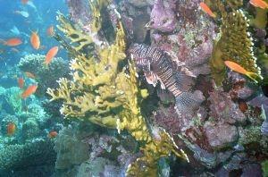 Snorkel Underwater beauty