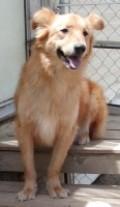 Dog Bytes—Rescue Dogs Sanctuary Broken Trust