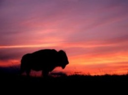 the night we camped in the badlands, I had a very long detailed dream about a stone buffalo and rider.