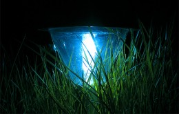 Blue LED solar-powered light set in tall grass
