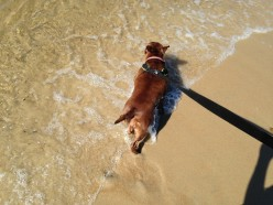 Healthy Dog: Beach Day